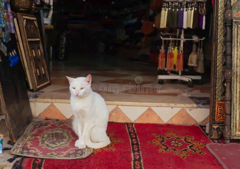 Eine weiße Katze, die auf einer Wolldecke in Marokko sitzt stockbild