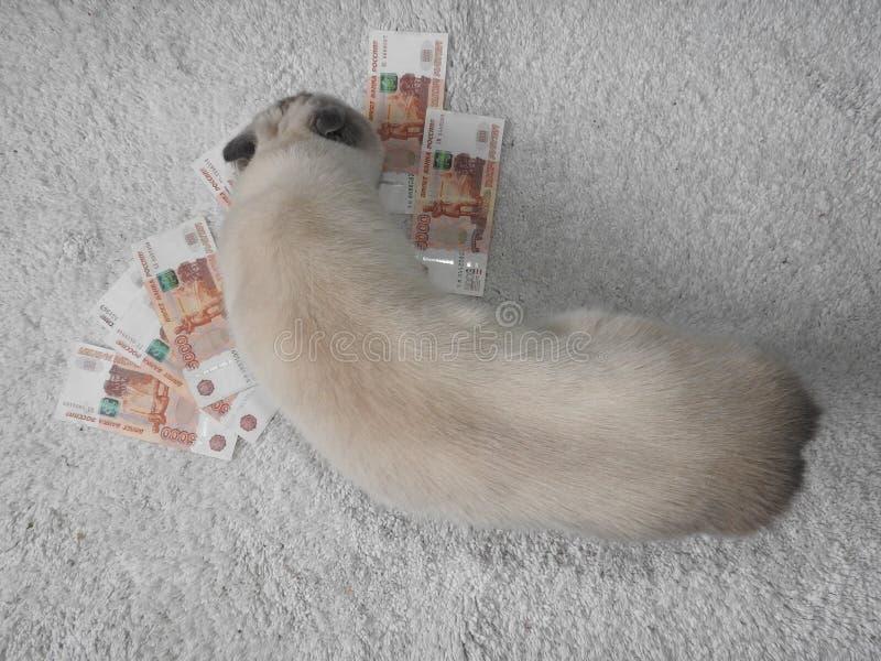 Eine weiße Katze wird mit Geld, ein unscharfer Hintergrund gespielt stockbild