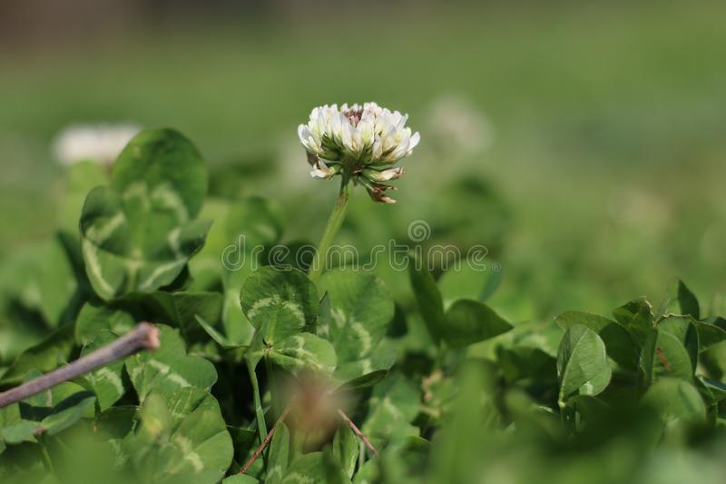 Eine Whitblume im Garten im Park stockfotos