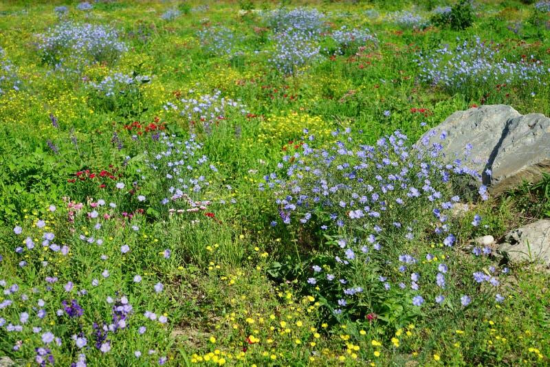 Eine Wiese voll von wilden Blumen lizenzfreies stockbild