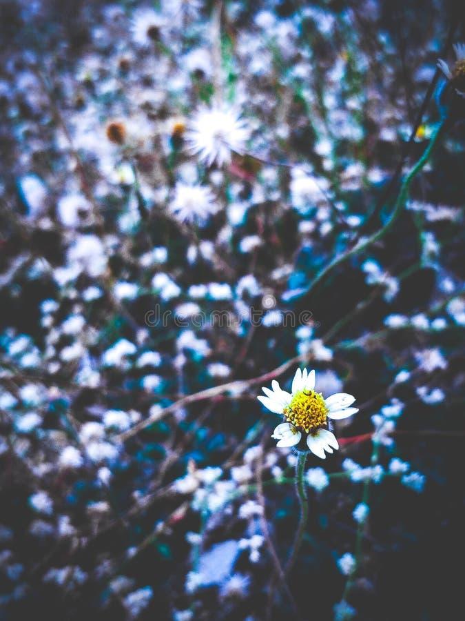 Eine wilde Blume stockbilder