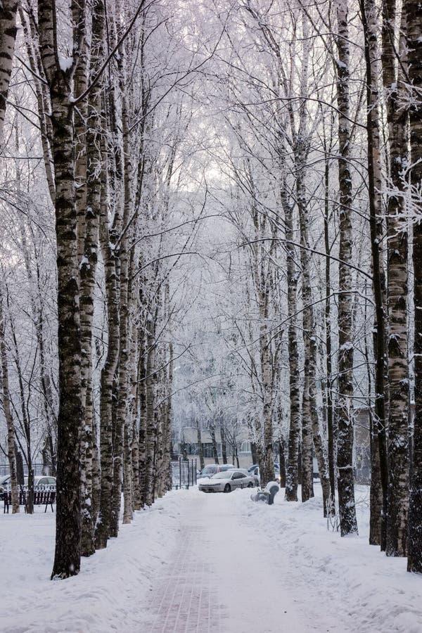 Eine Winterbahn lizenzfreie stockfotos