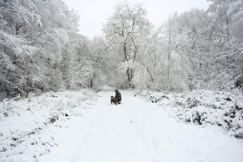 Eine Winterszene des Fußwegs und der Bäume bedeckt im Schnee und ein englischer Springer-Spaniel-Hund und sein Eigentümer, die in stockfotos