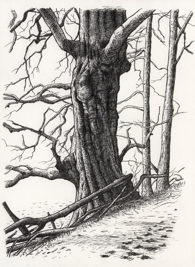 Eine Zeichnung eines Baums vektor abbildung