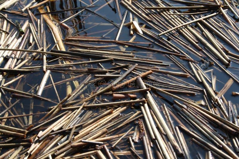 Eine Zusammenfassung von den toten Schilfen, die im Wasser treiben lizenzfreie stockbilder