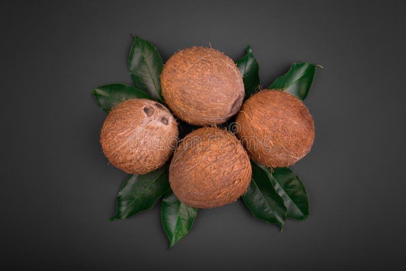 Eine Zusammensetzung von Kokosnüssen auf einem schwarzen Hintergrund Ganze braune Kokosnüsse auf frischen Blättern Schmackhafte h stockfotografie