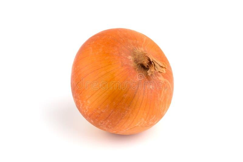 Eine Zwiebel auf einem weißen Hintergrund stockbilder