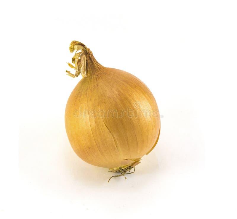 Eine Zwiebel auf weißem Hintergrund lizenzfreie stockfotos