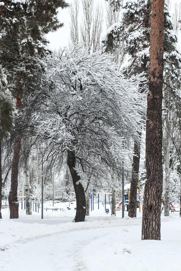 An einem eisigen schönen Tag unter Hochgebirge und Spitzen sind die magischen Bäume, die mit weißem flaumigem Schnee gegen das ma lizenzfreies stockfoto