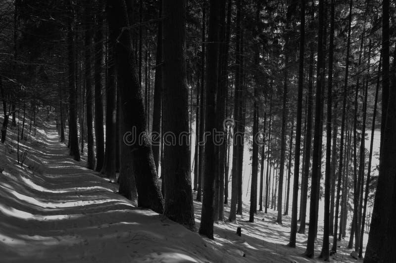 In einem Holz durch den See lizenzfreies stockbild