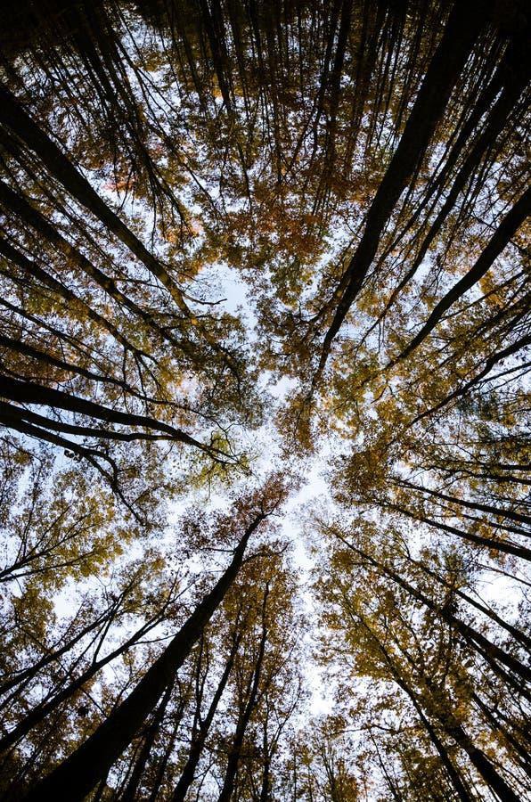 Download Einem Kabinendach Der Bäume Im Herbst Oben Betrachten Stockfoto - Bild von fall, blau: 27733006