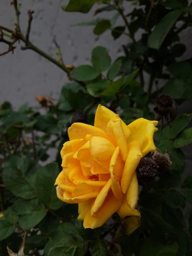 An einem regnerischen Tag: lizenzfreie stockfotografie