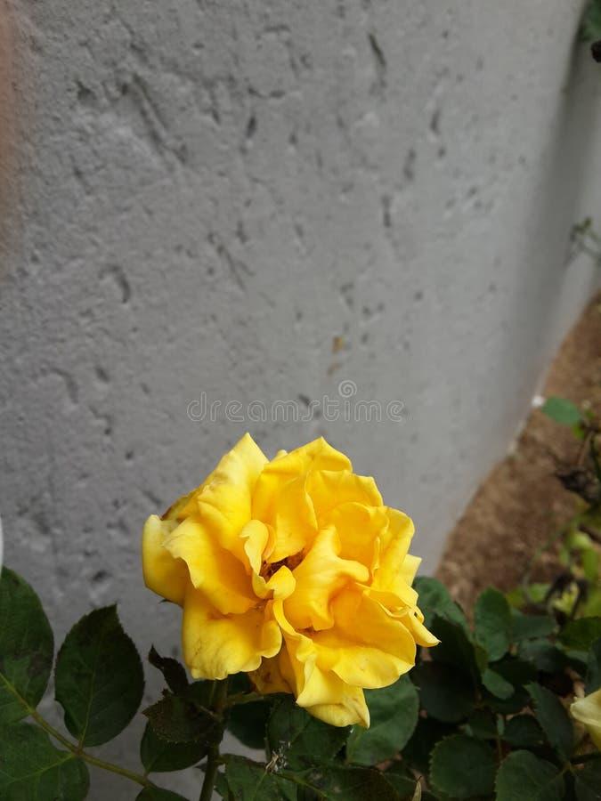 An einem regnerischen Tag: stockfotografie