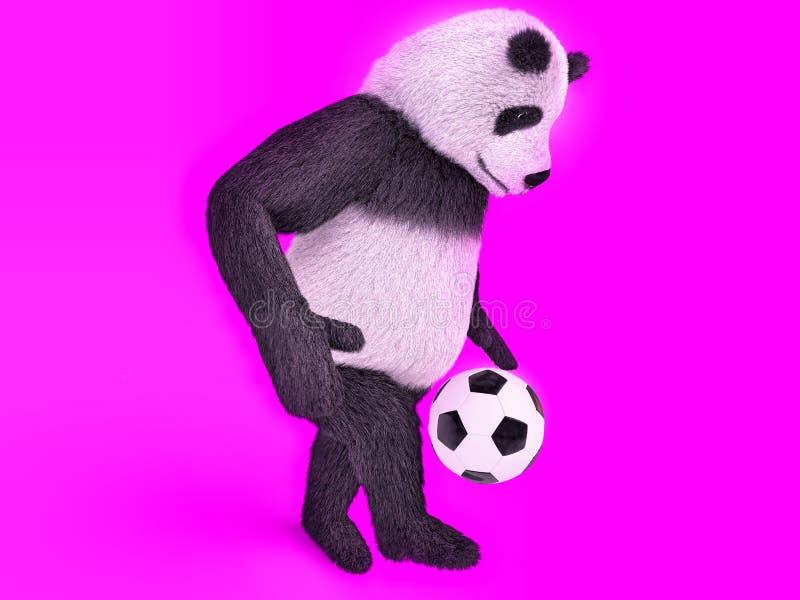 Einen Fußball auf purpurrotem Hintergrund zu Fuß jagen rührender netter Pandafußballspieler jonglierender Ballbär lizenzfreie abbildung