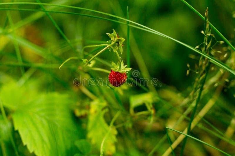 In einer Wanne und in den Büschen Natur, Zusammenfassung stockbilder