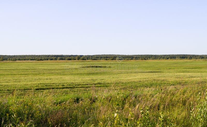 Einfach mit Gras am Sommer Hintergrund nave lizenzfreie stockfotografie