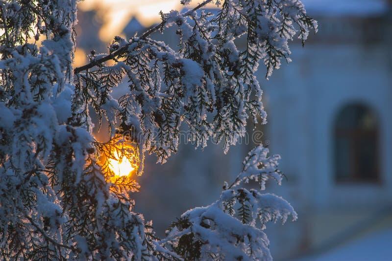 Einfach, vektorbild zu bearbeiten Weihnachtsfeiertagshintergrund, gefrorener Baumast stockfotografie