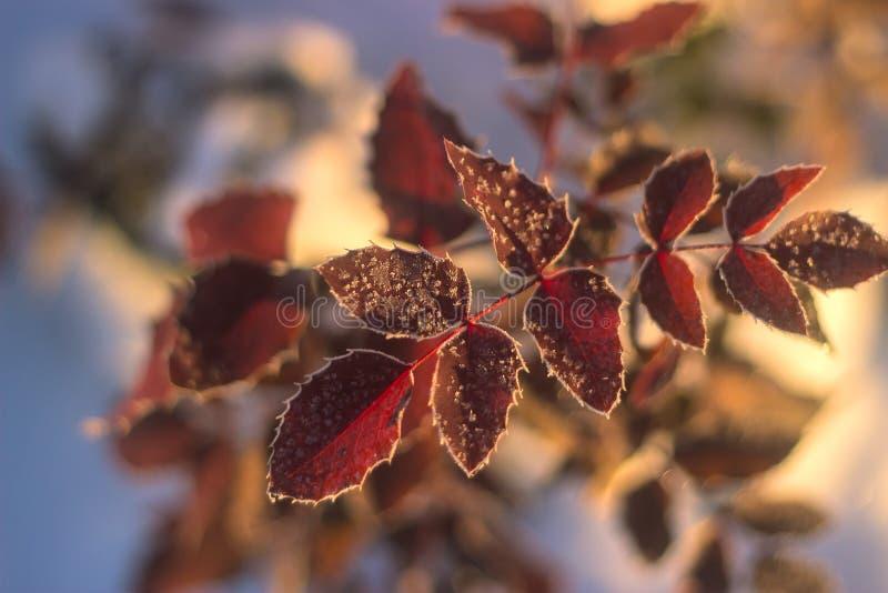 Einfach, vektorbild zu bearbeiten Weihnachtsfeiertagshintergrund, gefrorener Baumast lizenzfreie stockfotografie