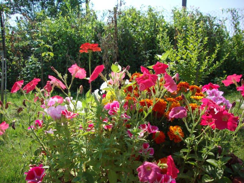 Einfache Gartenblumen stockfotos