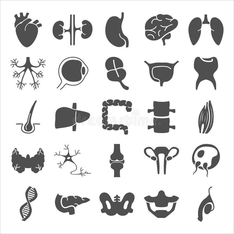 Atemberaubend Einfache Kreislaufsystemdiagramm Bilder - Menschliche ...