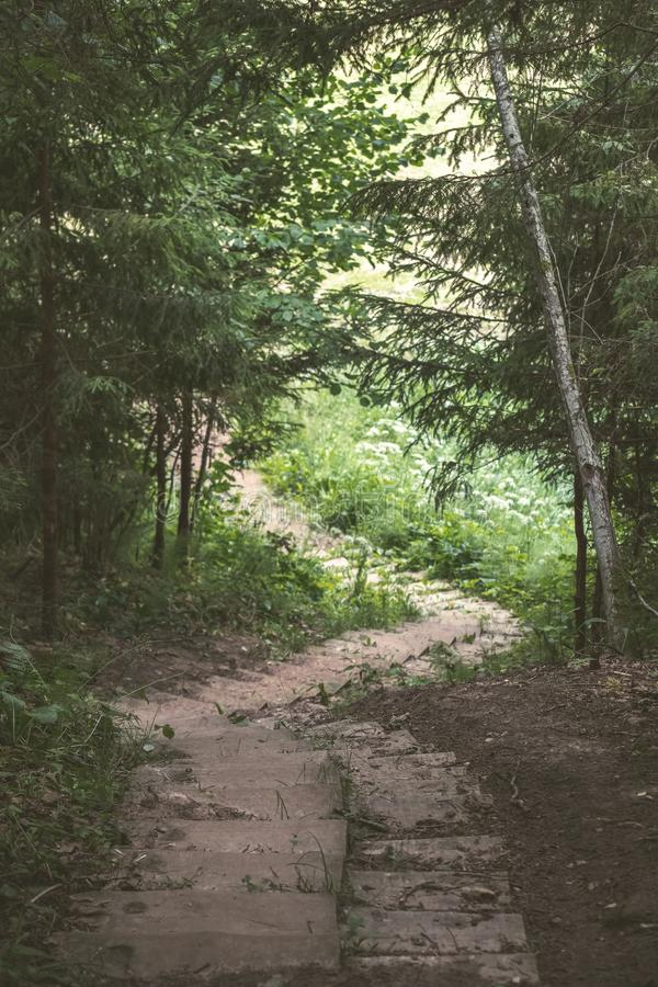 einfache Kieslandstraße im Sommer im Wald - Weinlese Retro- L stockbilder