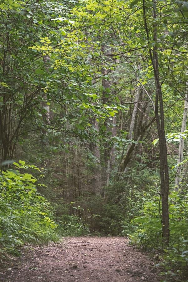 einfache Kieslandstraße im Sommer im Wald - Weinlese Retro- L stockfoto