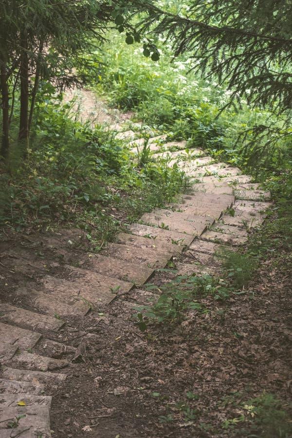 einfache Kieslandstraße im Sommer im Wald - Weinlese Retro- L lizenzfreie stockbilder