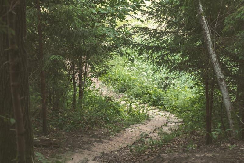 einfache Kieslandstraße im Sommer im Wald - Weinlese Retro- L stockbild