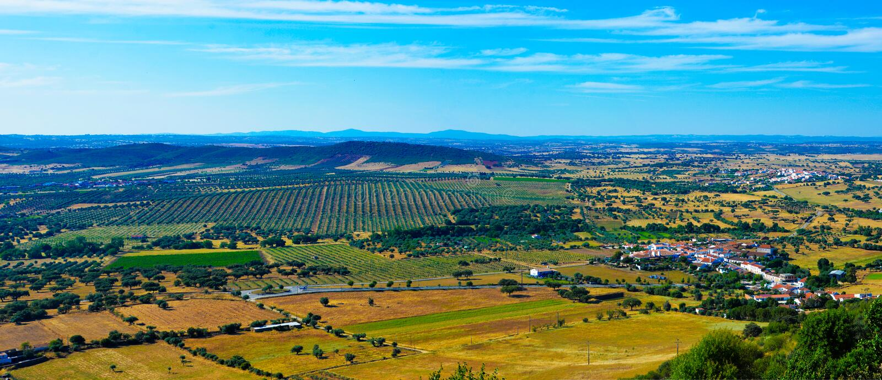Einfache Landschaft - Olive Trees Plantation - Alentejo, Reise Portugal stockfotos