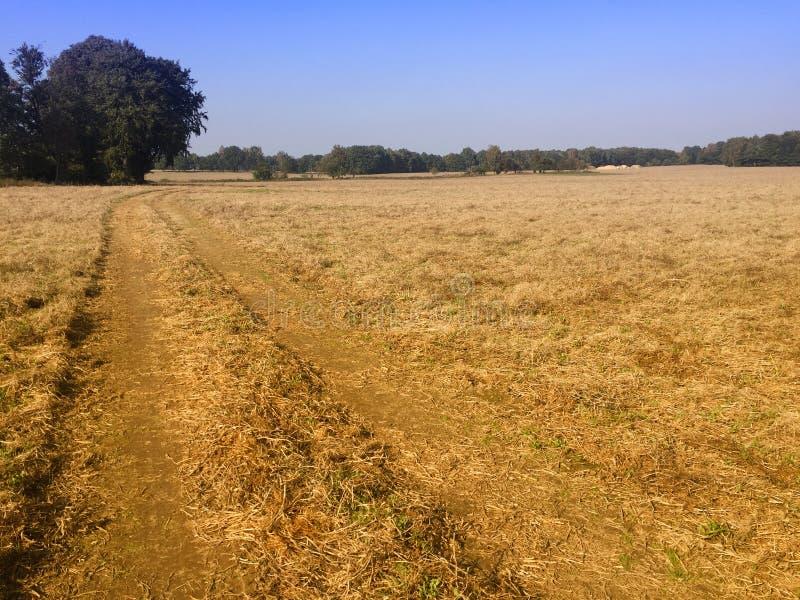Einfaches Feld nach Ernte, Polen stockbild