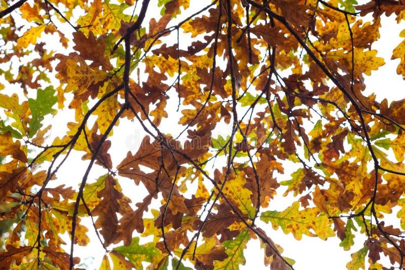 Einfaches Fotohintergrundmuster von toten orange leavs auf trockenem Baum lizenzfreie stockfotos