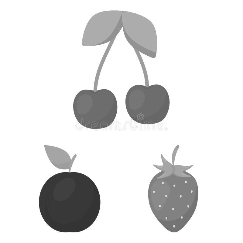 Einfarbige Ikonen der verschiedenen Früchte in der Satzsammlung für Design Früchte und Vitamine vector Netzillustration des Symbo lizenzfreie abbildung