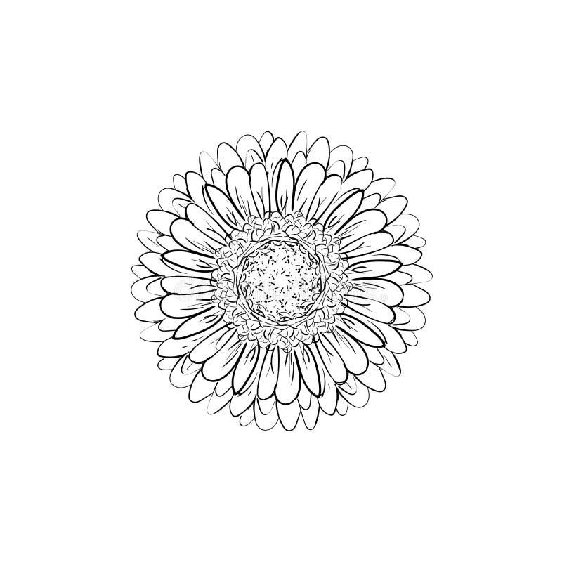 Einfarbige, Schwarzweiss-Gerberablume lokalisierte Von Hand gezeichnete Tiefenlinien und Anschl?ge Vektorblume Gerbera Element f? vektor abbildung