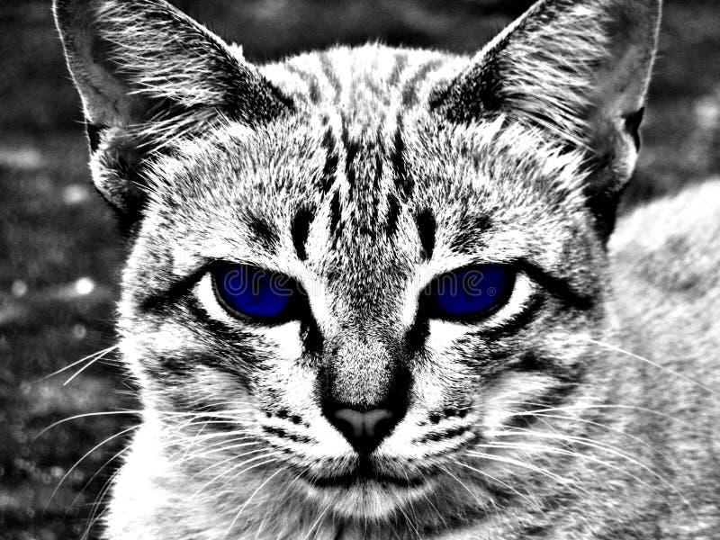 Einfarbiges blaues Auge der Katze stockfoto