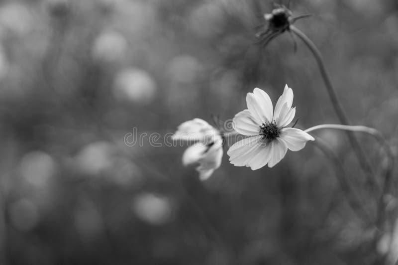 Einfarbiges Blumen-Makro stockfotos