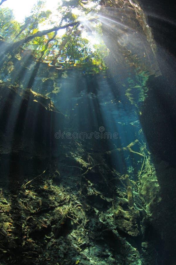 Eingang cenote Höhle stockfoto