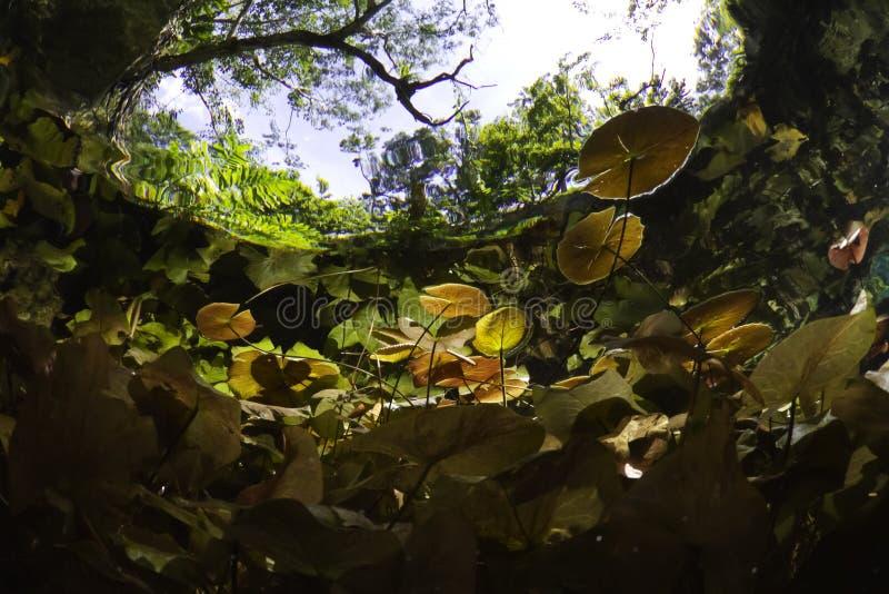 Eingang zum gran cenote lizenzfreies stockfoto