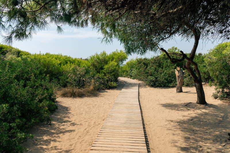 Eingang zum Strand, Sanddüne am Meer an einem sonnigen Sommertag mit blauem Himmel stockbild