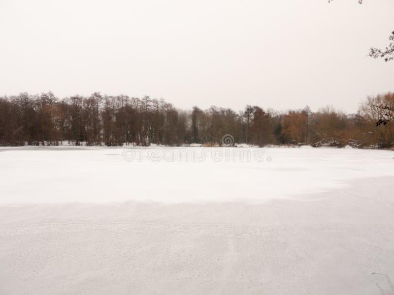 Eingefroren über des Oberflächenwassers des Sees des weißen bloßen Bäumen Schnee-Winters lizenzfreie stockbilder