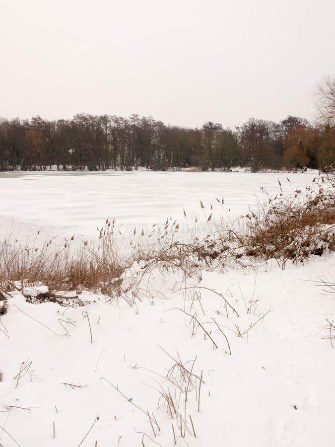 Eingefroren über des Oberflächenwassers des Sees des weißen bloßen Bäumen Schnee-Winters stockbild