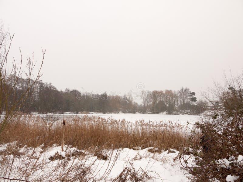 Eingefroren über See außerhalb der weißen Himmelbäume der Winternatur bloß mit stockbild