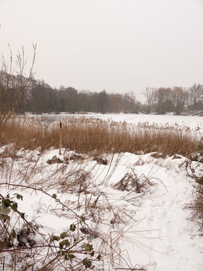 Eingefroren über See außerhalb der weißen Himmelbäume der Winternatur bloß mit lizenzfreie stockbilder