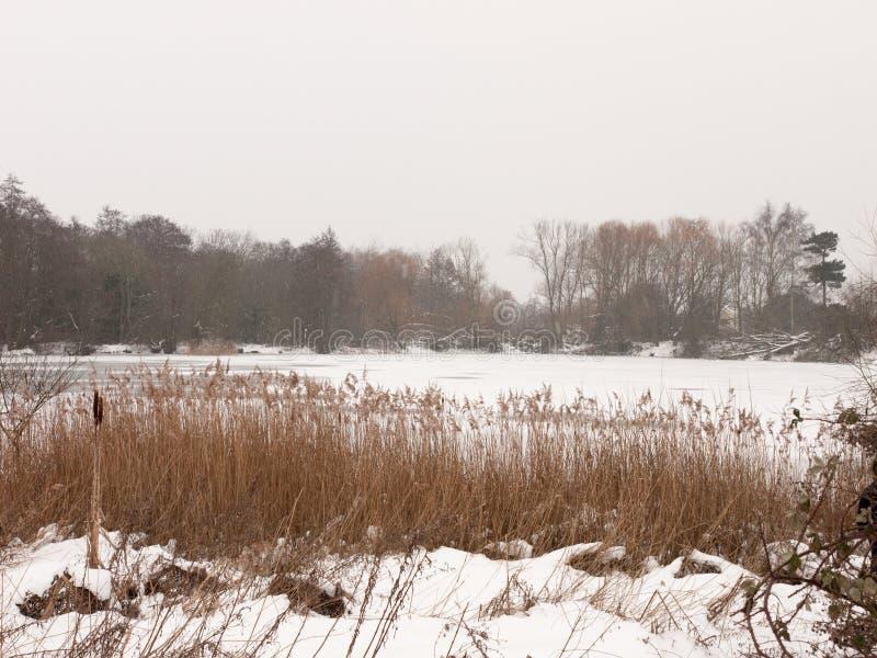 Eingefroren über See außerhalb der weißen Himmelbäume der Winternatur bloß mit stockbilder