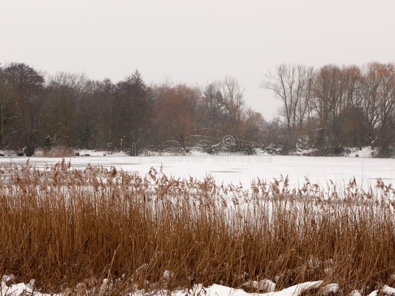Eingefroren über See außerhalb der weißen Himmelbäume der Winternatur bloß mit stockfotos