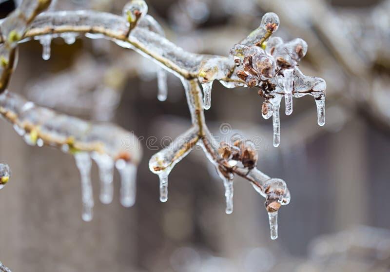 Eingefroren in den Eisniederlassungen lizenzfreie stockbilder