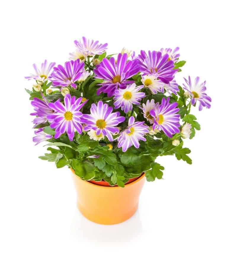 Eingemachte Blume stockfotos