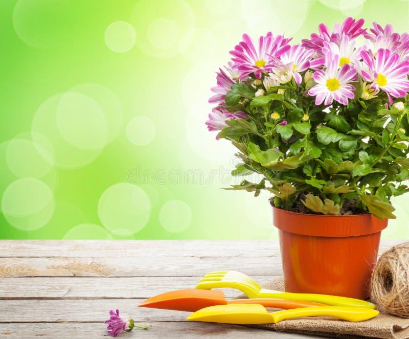 Eingemachte Blume und Gartenwerkzeuge lizenzfreie stockfotos