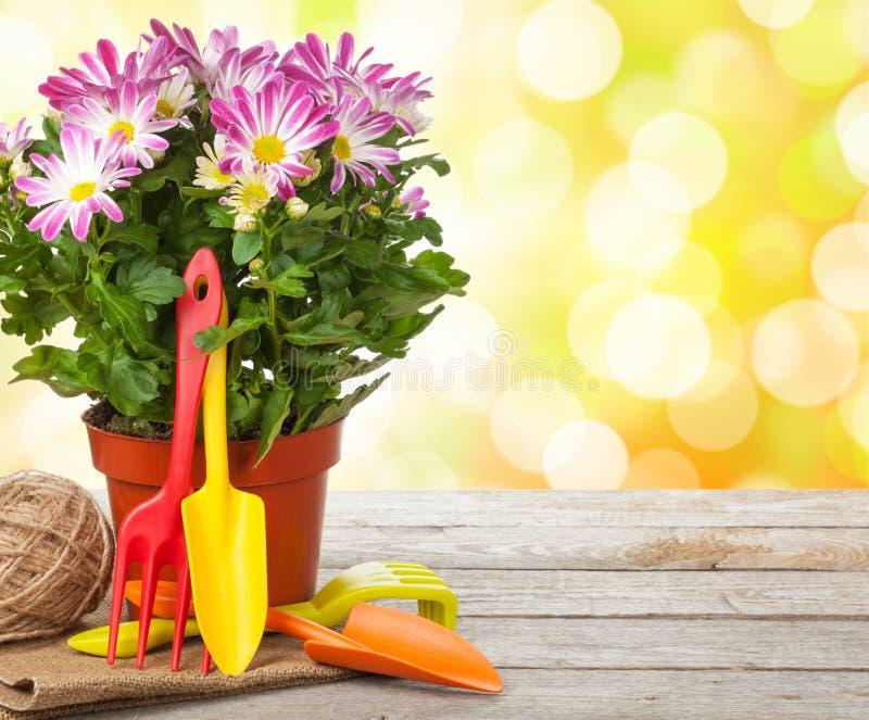 Eingemachte Blume und Gartenwerkzeuge stockbild