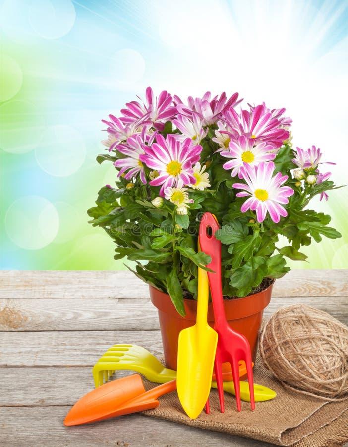 Eingemachte Blume und Gartenwerkzeuge stockbilder