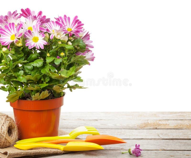 Eingemachte Blume und Gartenwerkzeuge stockfoto